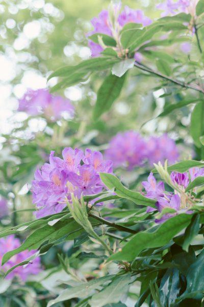 pink flowers delph woods